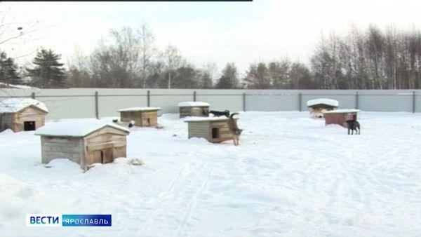 В ярославском приюте появятся новые вольеры для животных