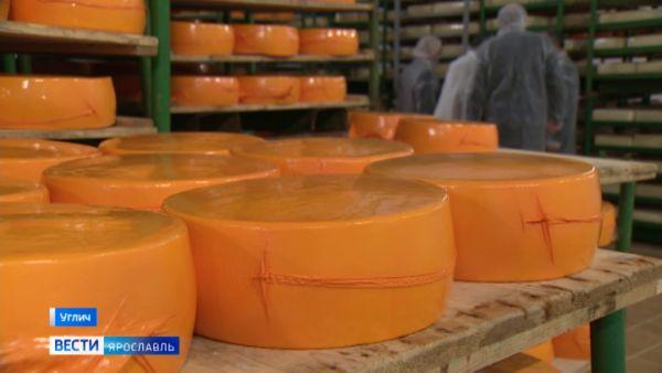 В Угличе модернизировали сыродельно-молочный завод