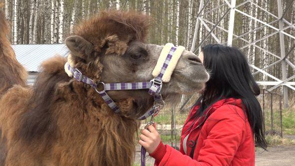 В Ярославле встретились участники «верблюжьего» конфликта