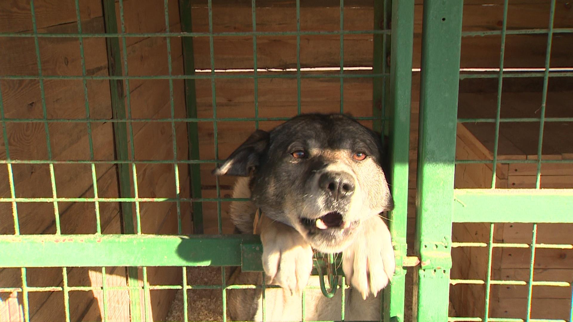 В Ярославле некому отлавливать бездомных собак: найдется ли новый подрядчик?