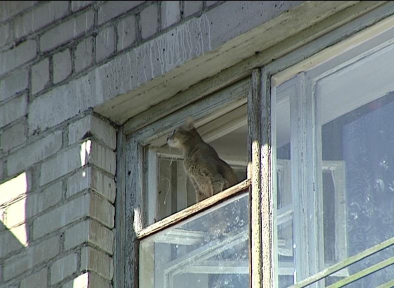 С наступлением жары участились случаи поступления в клиники котов-«парашютистов»