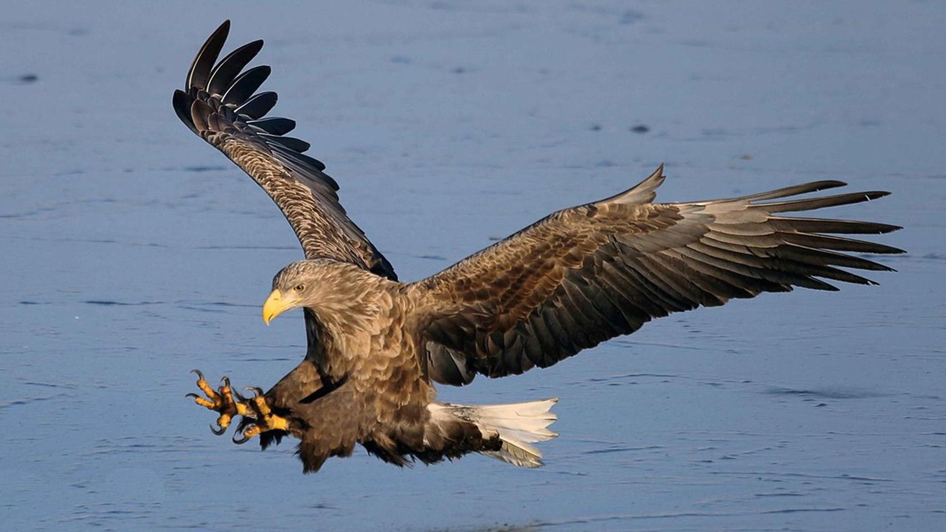 В Ярославской области отмечают Международный день птиц
