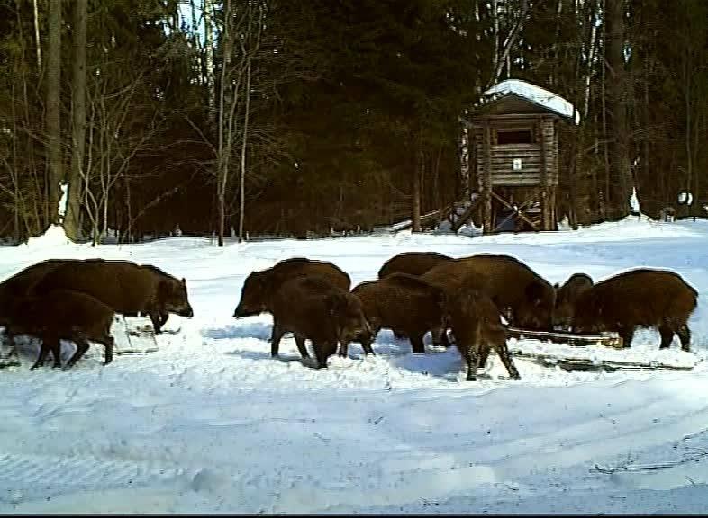 11 января в России отмечают День заповедников и национальных парков